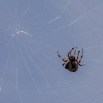 Spinnenpad Lefkada